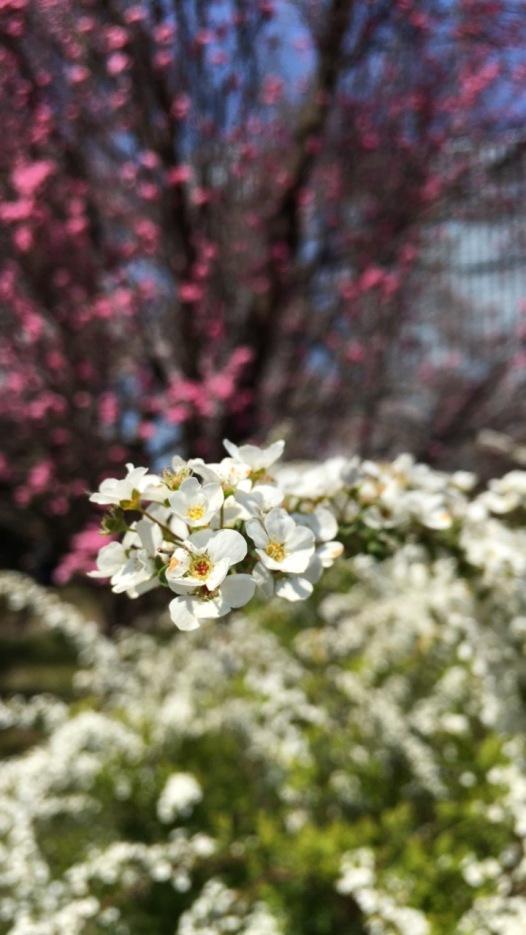 Spring in full bloom.